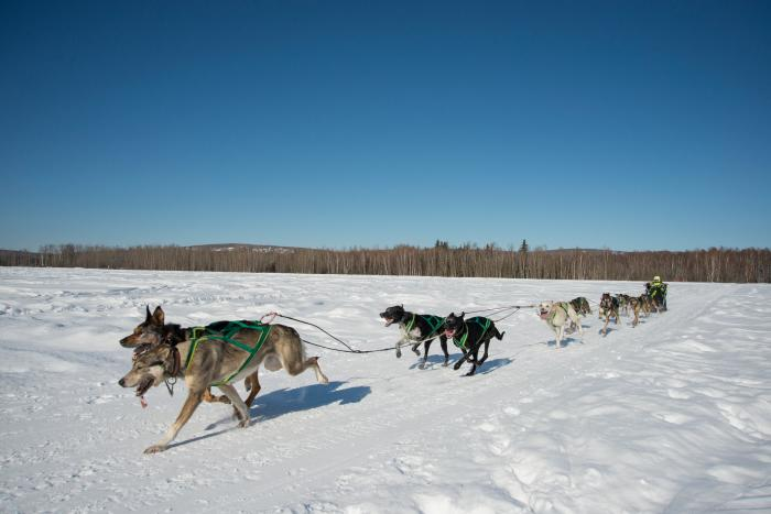 ONAC Sled dog team with musher