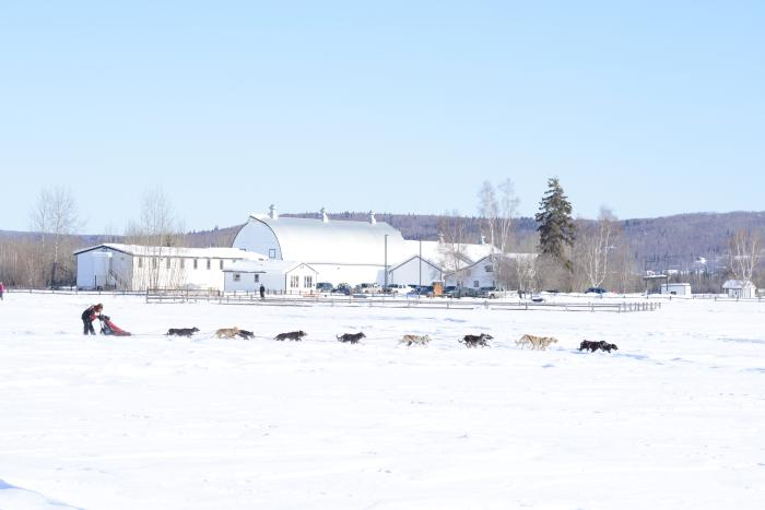 ONAC sled dog team with Creamers Dairy Barn in background
