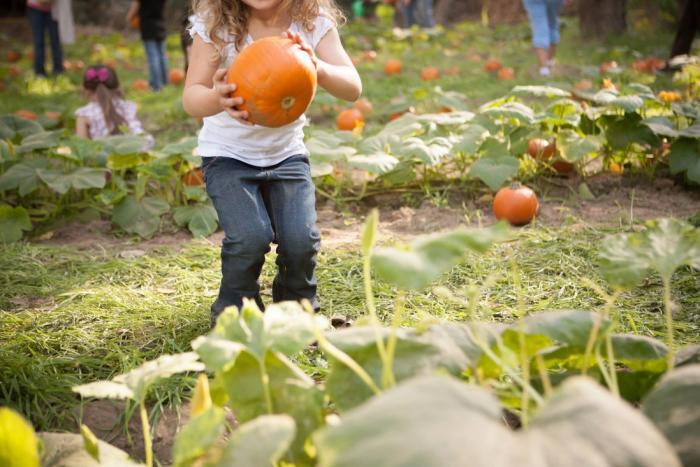 billy bob grove pumpkin picking