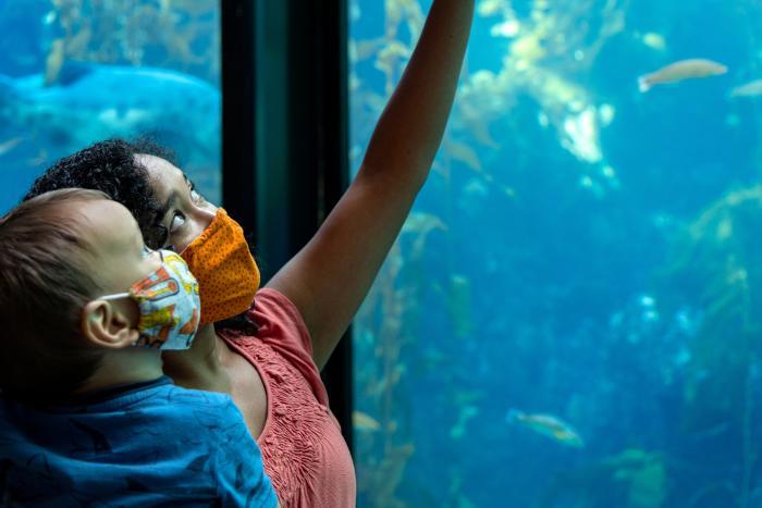 Monterey Bay Aquarium Guests