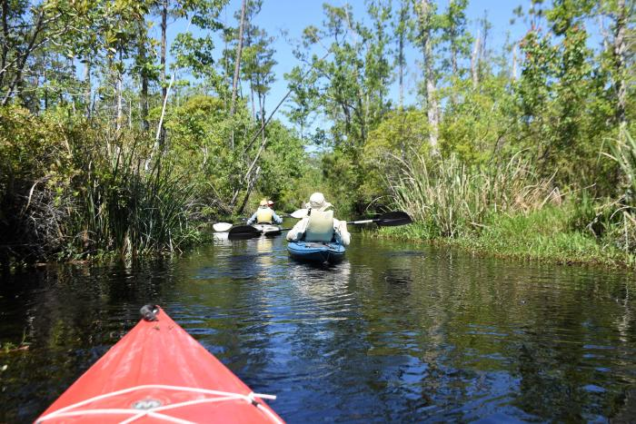 kayaking alligator river- credit nancy hann