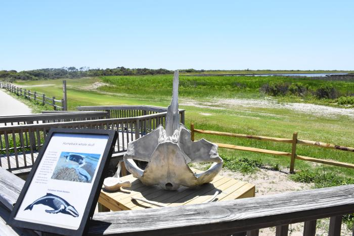 An exhibit along a boarded walkway at Pea Island National Wildlife Refuge