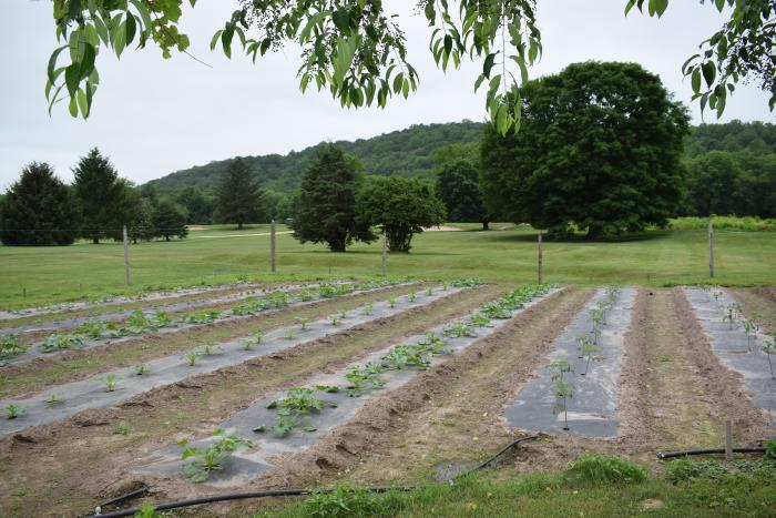 The 25,000 square foot Shawnee Island Farm provides fresh produce to restaurants at The Shawnee Inn and Golf Resort.