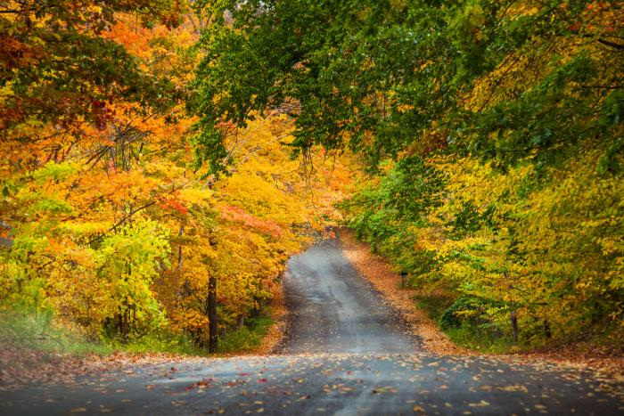 Leelanau County Fall Road