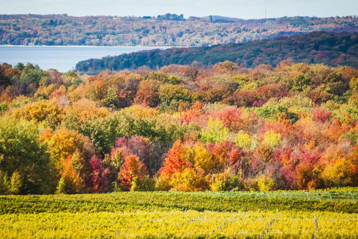 Fall Color on the Old Mission Peninsula in Michigan