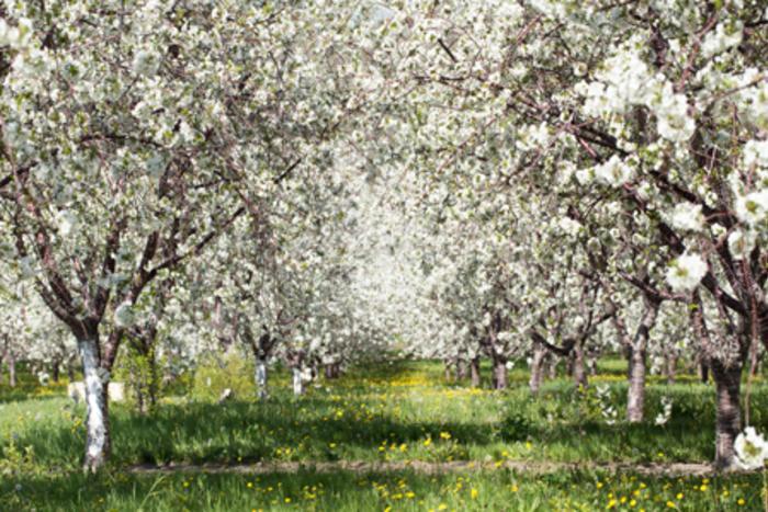 Leelanau Orchard