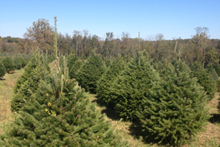 Create Holiday Memories at Loudoun Christmas Tree Farms