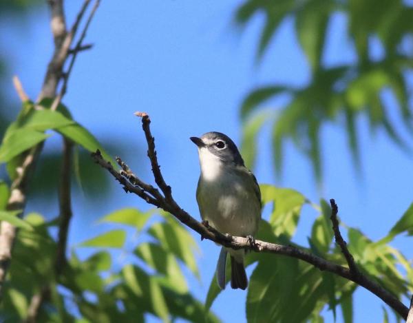 Bird sitting on branch at Cullinan Park.