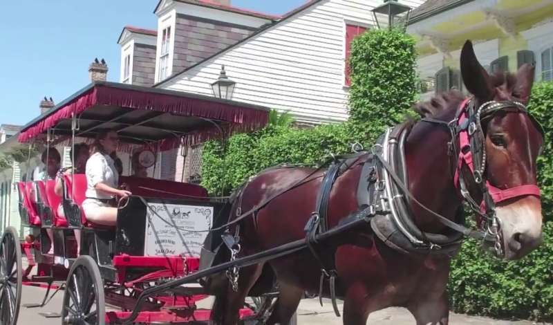 Royal Carriages Authentic Mule-Drawn Carriage Tours
