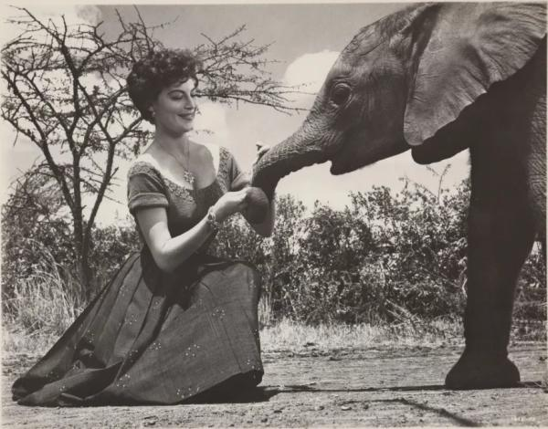 Ava Gardner pets a baby elephant.