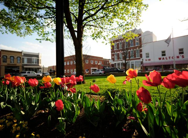 Bentonville Square with Tulips