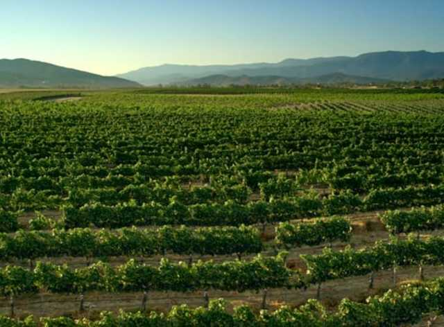 Temecula Valley Southern California Wine Country & Wineries