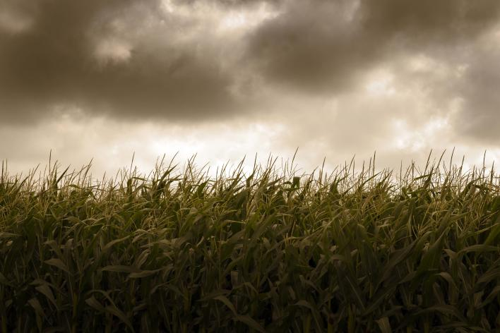 Cloudy Haunted Corn Field in Des Moines