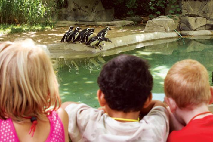 Blank Park Zoo Kids
