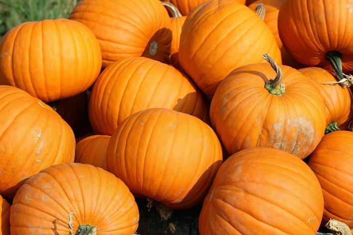 Pumpkins - Halloween