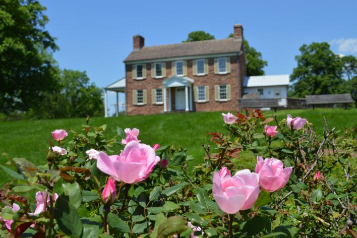 pink roses in the foreground of Ben Lomond Historic Site