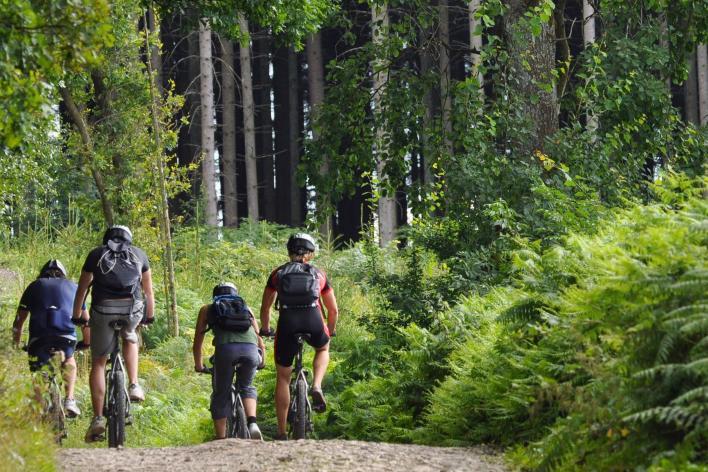 Group biking on gravel trail through park forest