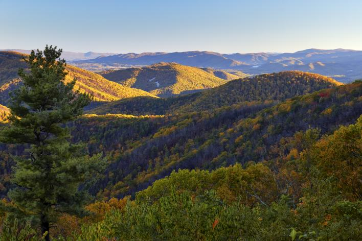 fall foliage on a mountain top