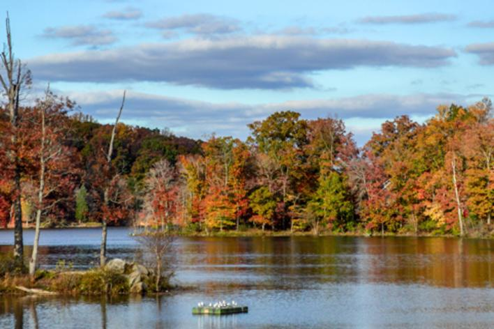 Trees with fall foliage along a body of water