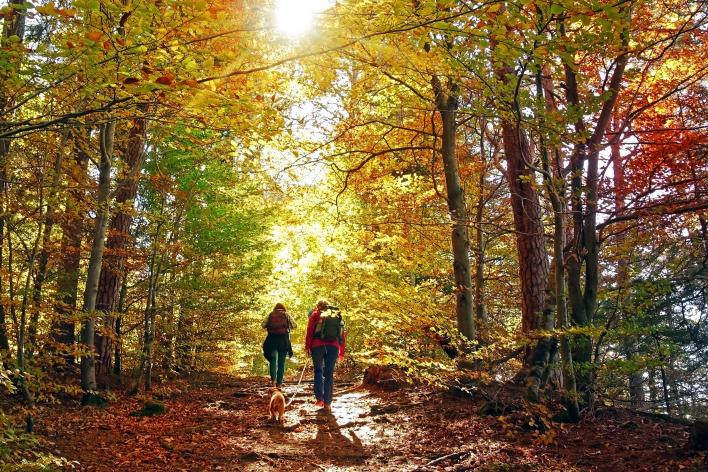 couple hiking on a trail in the forest with a small dog during Autumn