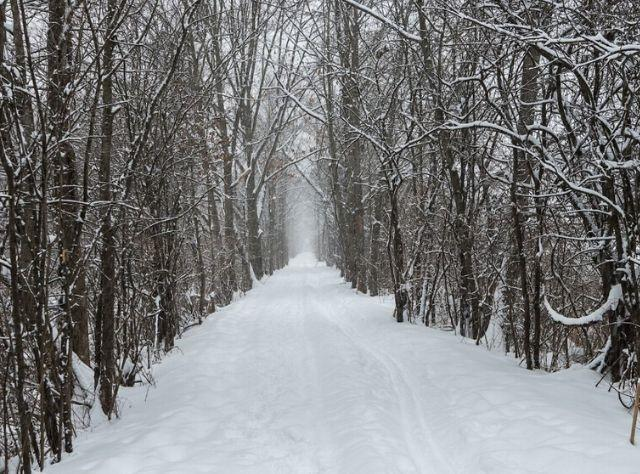 Fischer Ferry Nature & Historic Preserve, Clifton Park in the snow
