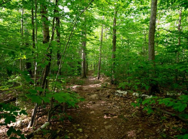 Arca Point Trail