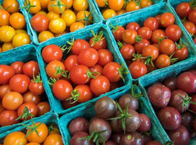 A picture of bins of tomatoes from Kent Family Growers