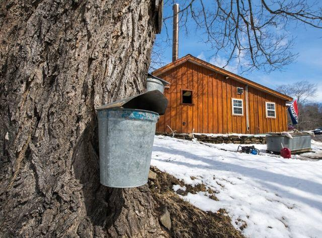 Thompson's Sugar Shack, LLC during Maple Weekend, held annually state-wide the last two weekends in March, Schoharie County, Central New York Region
