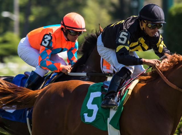 Two jockeys racing on their thoroughbred horses at the Saratoga Race Track