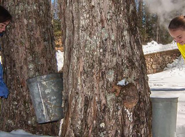 NYS Maple Syrup Weekend - Photo Courtesy of NYS Maple Syrup Weekend