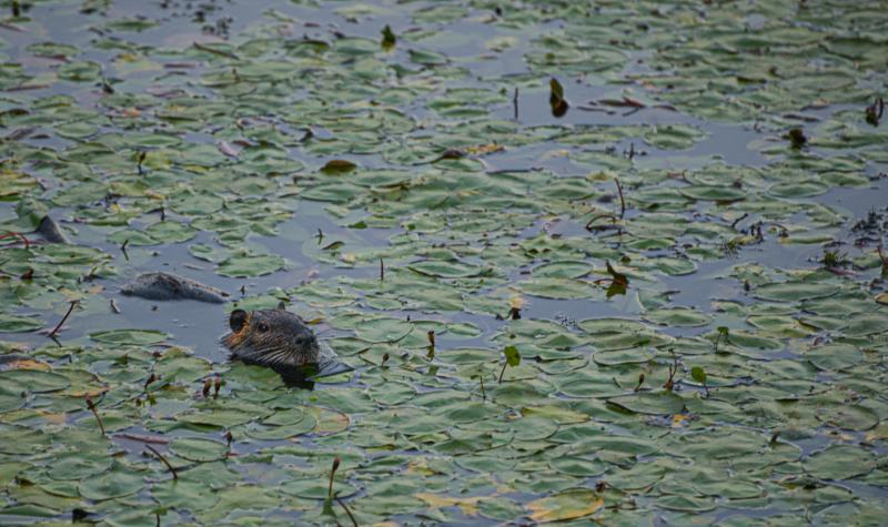 Delta Ponds wildlife by Melanie Griffin