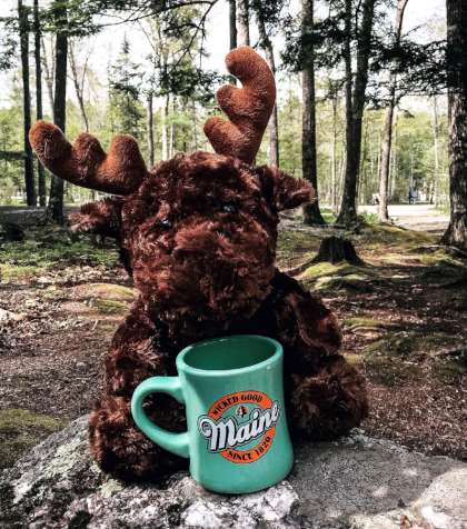 Moose & Coffee