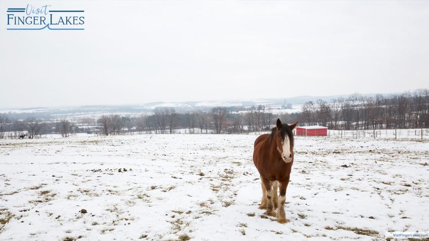 A horse out to pasture in the winter