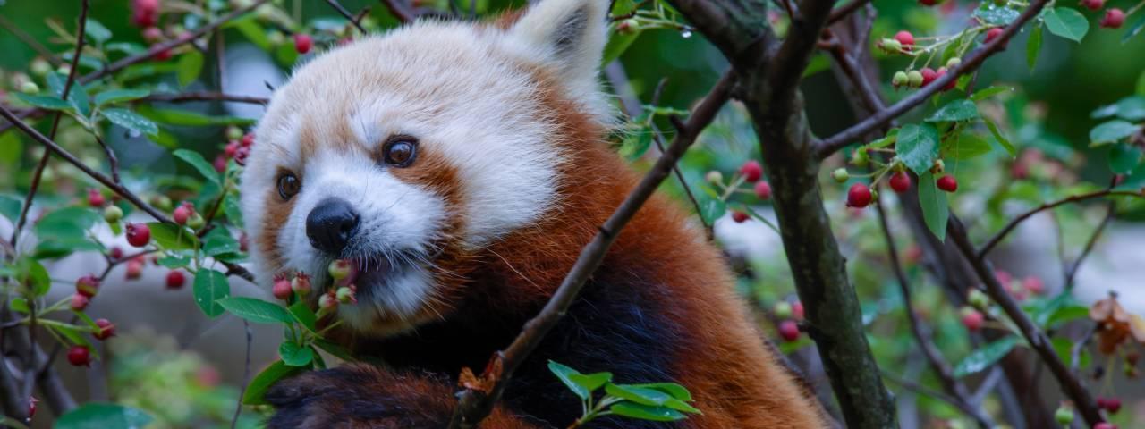 Elmwood Park Zoo Favorite Animals Header