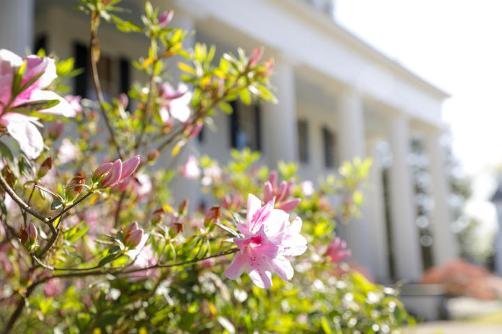 Historic Home spring