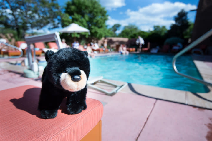 33770-Inn_and_Spa_at_Loretto_Pool_Bear-Medium