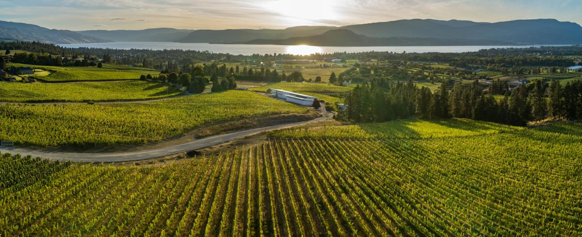 Tantalus Vineyards-Panorama Vineyard View (2)