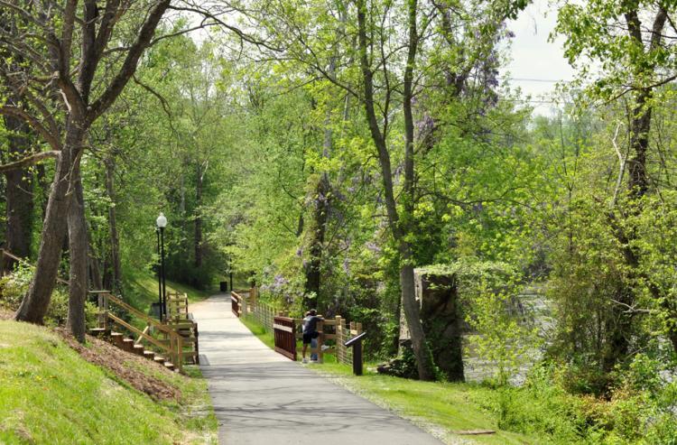 Trees along the Buffalo Creek Path in Clayton, NC.