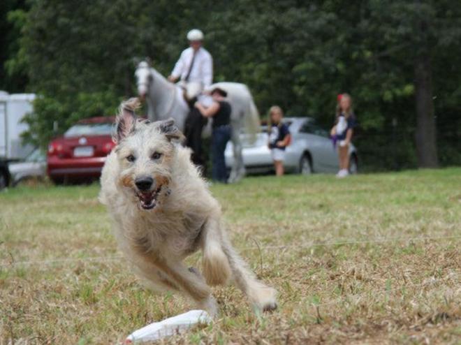 Horse & Hound Wine Festival - Bedford, VA