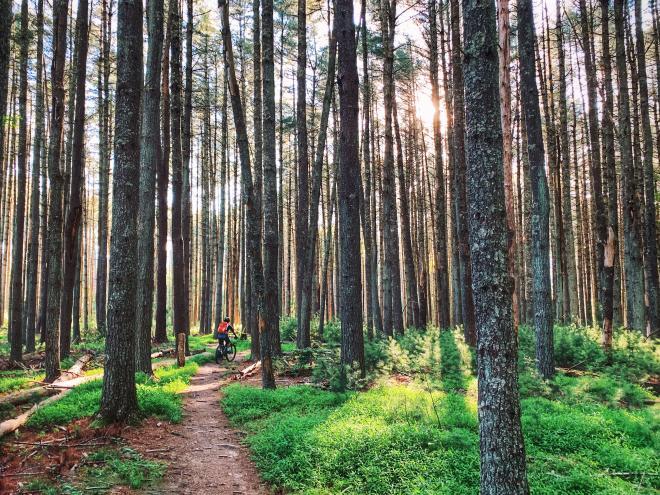 Mountain Biking - Carvins Cove Enchanted Forest - Roanoke, VA