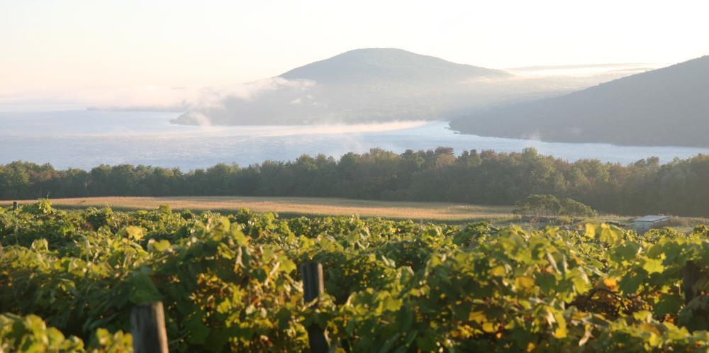 finger-lakes-canandaigua-grapes-vines-close
