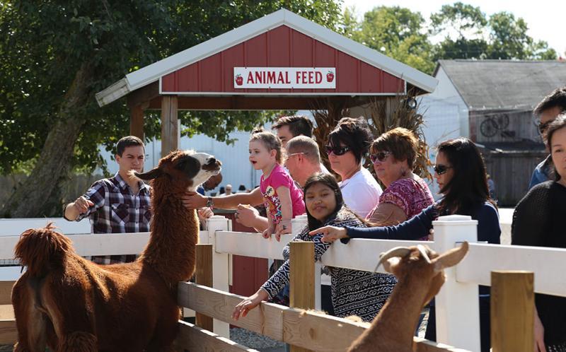 Wiard's Petting Zoo & Animal Feed