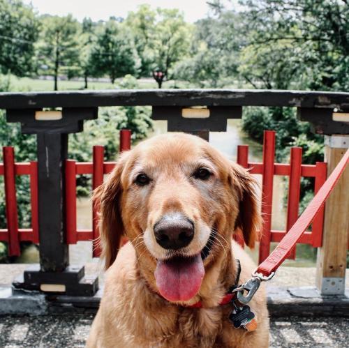 Bradley Park Dog