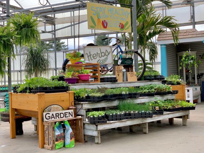 An herb display at Greenstreet Gardens