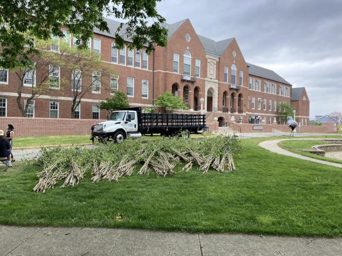 Sticks and saplings being laid out at Maryland Hall for the sculpture