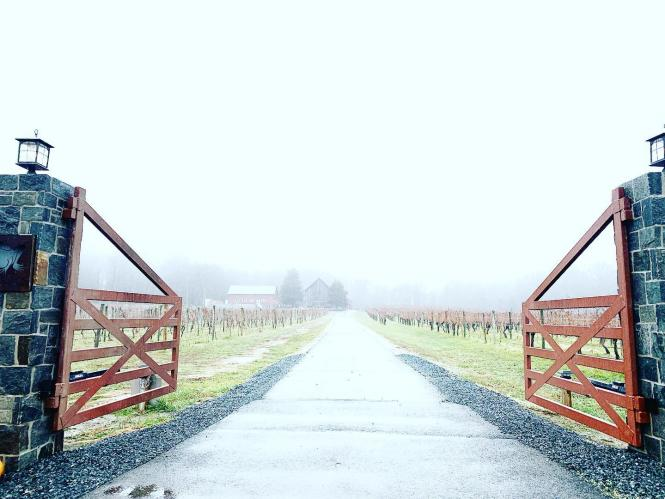 An open gate to the road leading into great Frogs Winery through the mist.