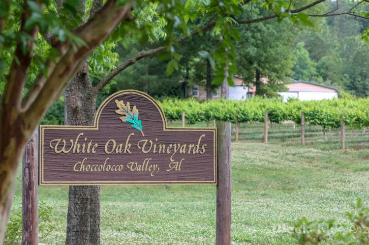 white oak vineyards