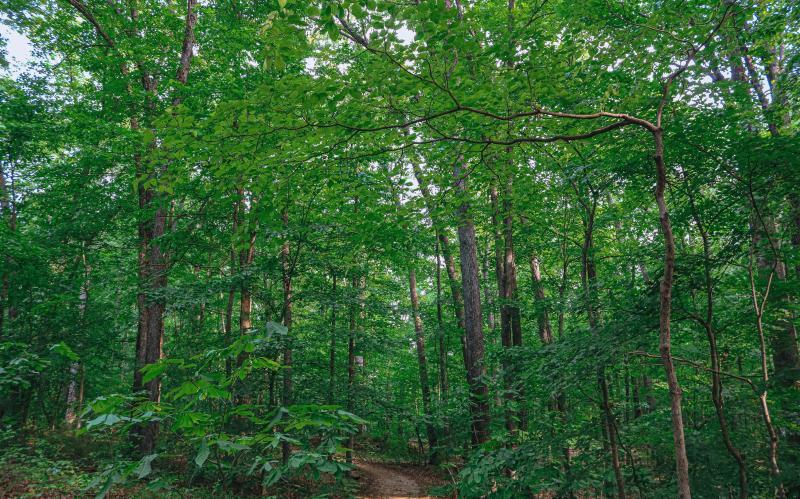 Hiking trail at Hardin Ridge SRA