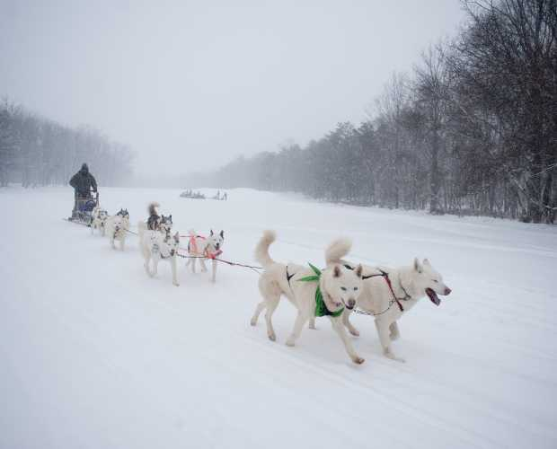 Pocono Mountains Dog Sledding | Winter Sport