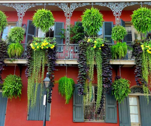 French Quarter Foliage